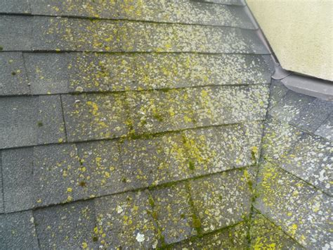 """Moss Covered Roofs Not Always """"green""""'"""