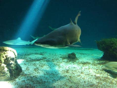 les requins picture of aquarium le 7eme continent talmont hilaire tripadvisor