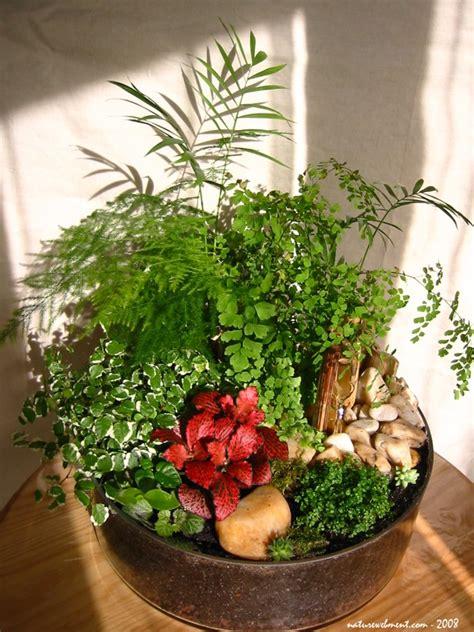 petit jardin d int 233 rieur blognature fr