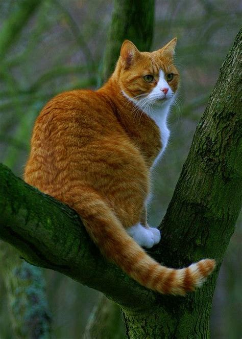 are cats color blind 17 best images about cat facts on tuxedo cats