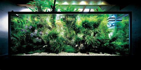 image aquarium aquascape design ideas
