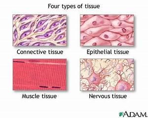ehumanbiofield - HB Human Cells and Tissues