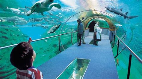 aquarium sea palace museums in san sebasti 225 n guip 250 zcoa gipuzkoa at spain is culture
