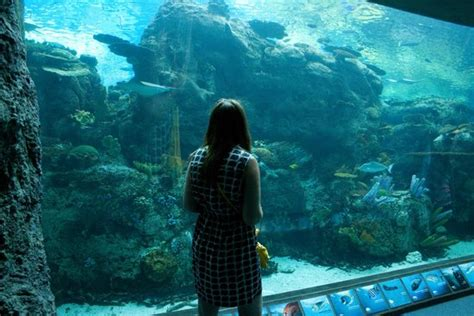 so peaceful i could stayed there all day picture of aquarium of the pacific