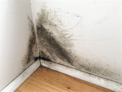 black mold removal Archives  FreshStart Restoration