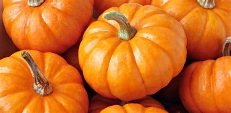 Halloween Express Rochester Mn 2017 by 18 Pumpkin Picking Farms In Nj Pickin Pumpkins For