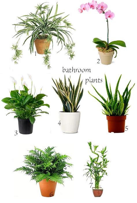 plants in bathroom no light image mag