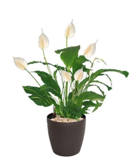 livraison fleurs le havre fleuriste le havre 76 seine maritime
