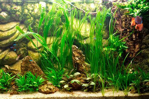 aquarium meduse eau douce 28 images aquarium d eau douce feuilles en plastiques id de
