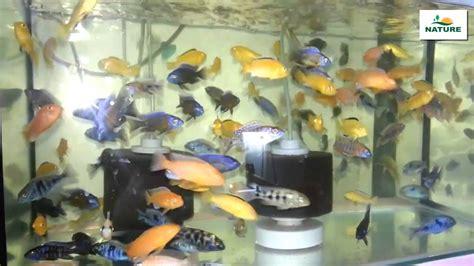 poissons d eau douce pour votre aquarium