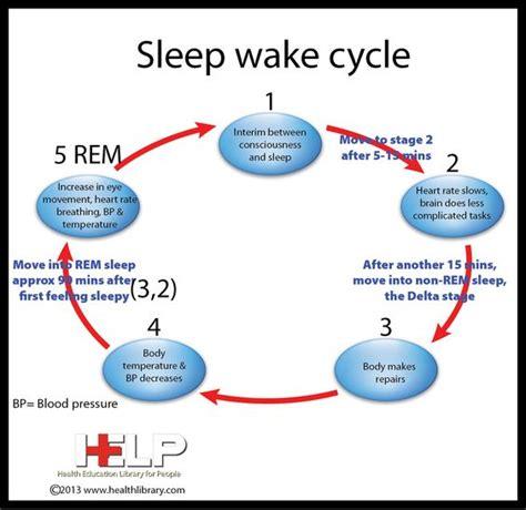 Sleep Wake Cycle sleep on pinterest