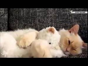 Cats Love Hugging Toys! - YouTube