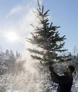 Was Hat Der Tannenbaum Mit Weihnachten Zu Tun : o tannenbaum was hat der christbaum mit weihnachten zu tun news inland ~ Whattoseeinmadrid.com Haus und Dekorationen