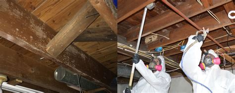 Basement Mold Removal in NJ  Professional, Guaranteed