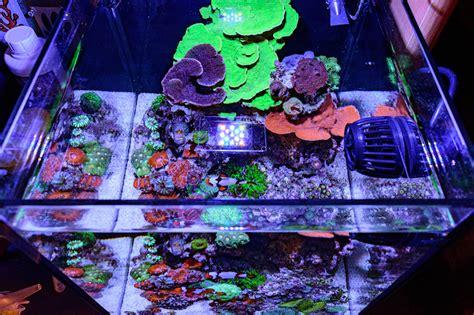 teenyreef s impeccable 10 gallon reef tank featured reefs nano aquarium reef builders the