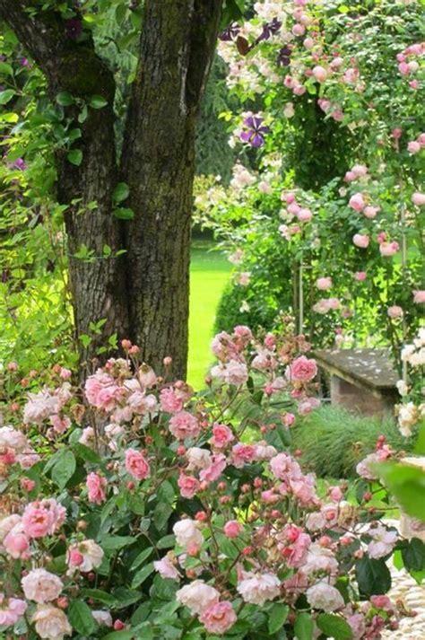 Rosa Garten Ein Traum Von Einem Verwunschenen Rosengarten