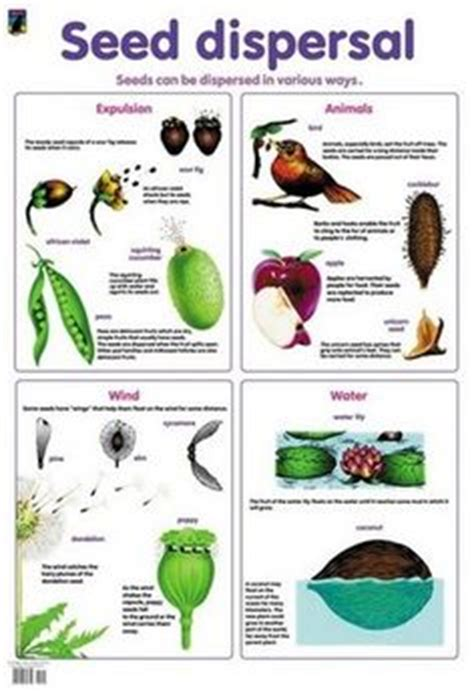 Seed Dispersal Simple Diagram Of Different Types