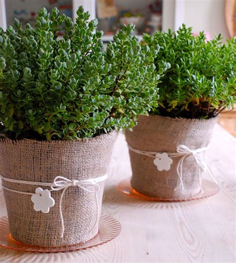 17 best ideas about plastic plant pots on harvesting tools plastic pots and easy