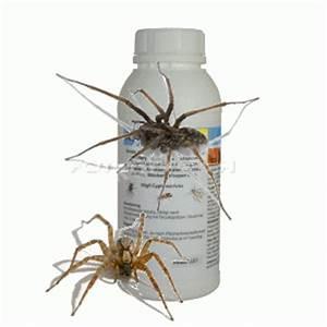Spinnen Fernhalten Wohnung : haus spinnen tiere arten giftige bek mpfungs mittel pr parat produkt chemisch ~ Whattoseeinmadrid.com Haus und Dekorationen