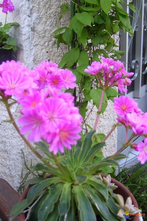 plante grasse fleurie
