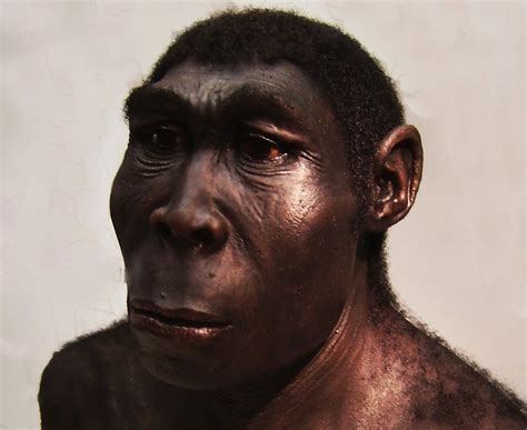 Facts About Homo Erectus