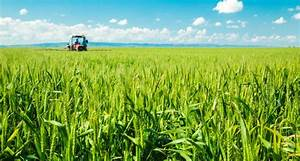 SHOCK: GM crops are good for you and the planet, reckon ...