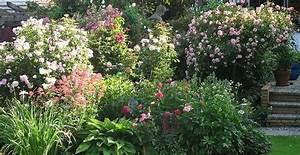 Mediterraner Garten Winterhart : mediterrane pflanzen im garten und auf der terrasse mediterraner garten pinterest ~ Markanthonyermac.com Haus und Dekorationen
