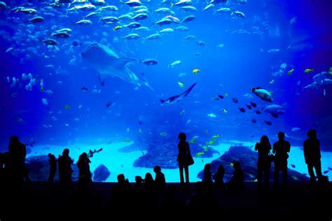 anneau des mers grand aquarium de malo vacances bretagne