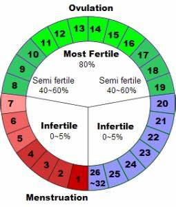 menstrual-cycle-chart | Health Benefits | Pinterest ...