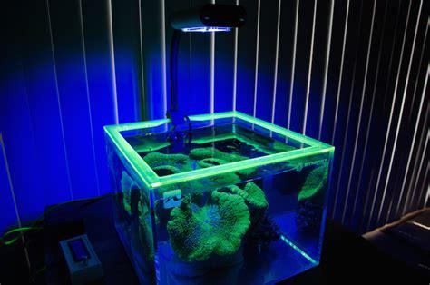 this nano is great single species aquarium aquanerd