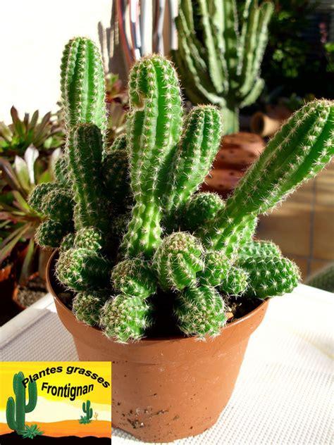 cactus mediterraneens rustiques
