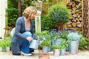 Pflanzen Zu Hause : urlaubsstimmung f r zu hause das gr ne medienhaus ~ Markanthonyermac.com Haus und Dekorationen