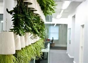 Blumen Von Der Decke Hängen : sky planter im greenbop online shop kaufen ~ Markanthonyermac.com Haus und Dekorationen