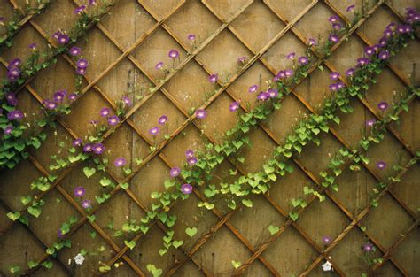What Are Garden Trellises Used For?