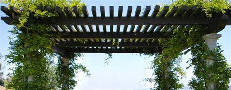 pergola pour plante grimpante un support naturel pour cr 233 er de l ombre