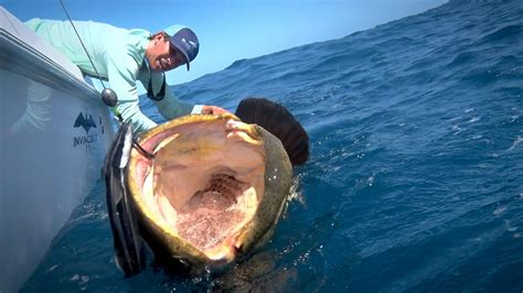 Soul Boat Videos by Monster Fishing On Shallow Florida Wrecks Youtube