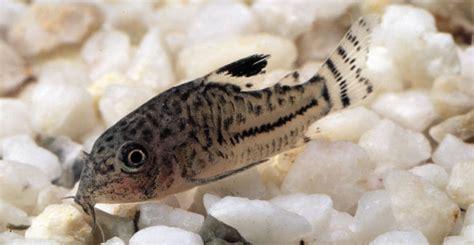 conseils poissons d aquarium truffaut