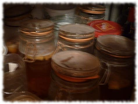 nourritures vivantes les angillules de vinaigre nourriture fiche et documentation l