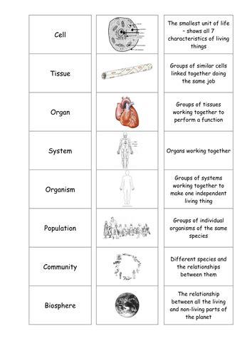 Cells Tissues Organs Cardsort By Motllorrac  Teaching Resources Tes