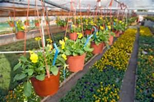 Pflanzen Bewässern Mit Plastikflasche : pflanzen und bew sserungssysteme so installieren sie eine urlaubsbew sserung ~ Markanthonyermac.com Haus und Dekorationen