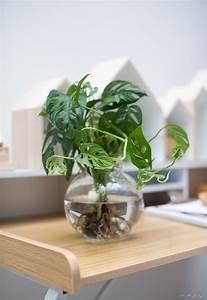 Pflanzen Für Wohnzimmer : dekorieren mit pflanzen moosb lle mit orchideen selber basteln ~ Markanthonyermac.com Haus und Dekorationen