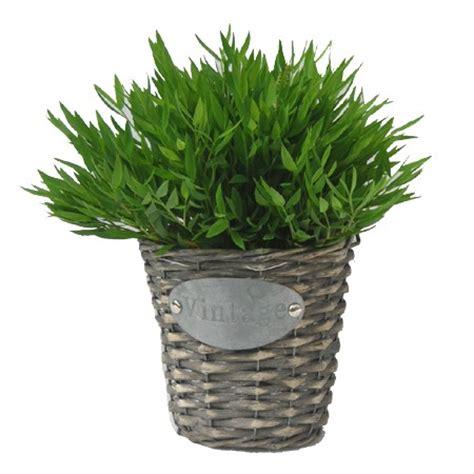 bambou d int 233 rieur extase cache pot vintage plantes et jardins