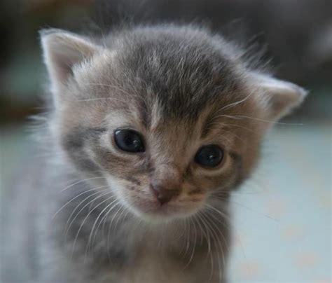 comment faire pour que mon b 233 b 233 chat arr 234 te de pleurer