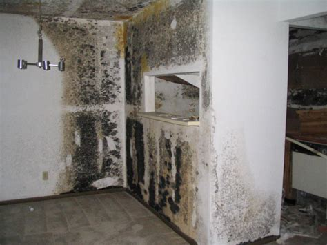 Basement Solutions Mold Removal and Remediation  On The