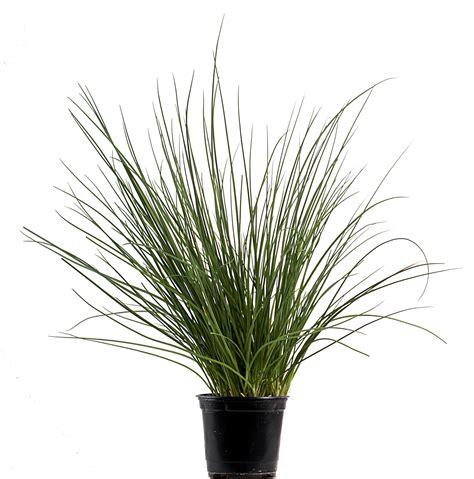 d 233 couvrez nos actualit 233 s remy basilic producteurs distributeurs de plantes aromatiques
