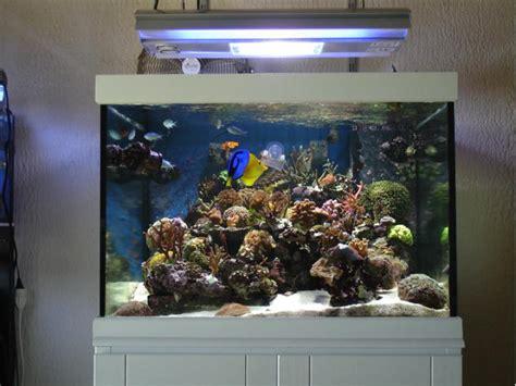 aquarium eau de mer cout