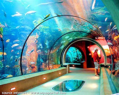 acclimatation d une an 233 de mer en aquarium
