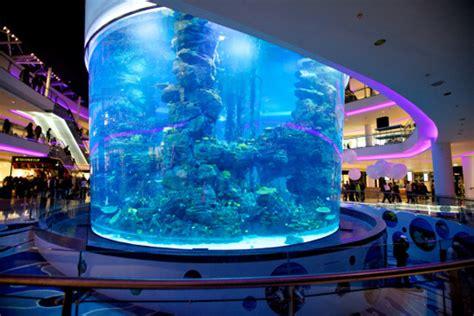 aquarium du morocco mall mort de plus de 2000 poissons 224 cause d une faute professionnelle