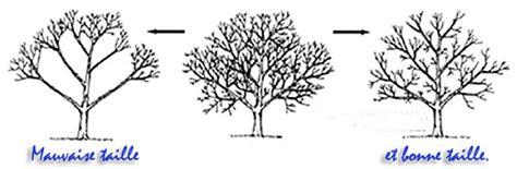 comment tailler les arbres la taille douce page 2 4
