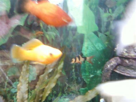 pourriture des nageoires sur n 233 ons aquariums et vivariums forum animaux